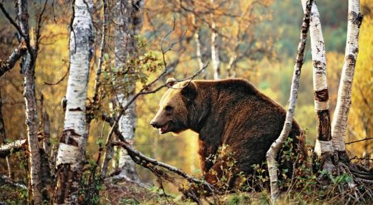 熊,森林,秋天