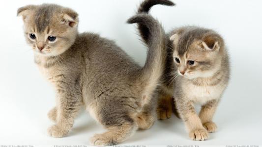 小猫,情侣,孩子们
