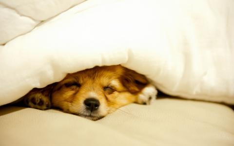房子,舒适,狗