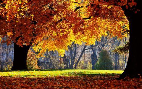 森林,秋天