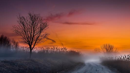 路,芦苇,雾,黎明
