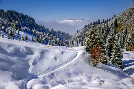 壁纸冬天,山,冷杉,雪,路径。