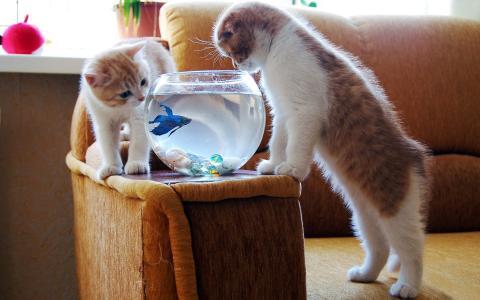 鱼,水族馆,小猫