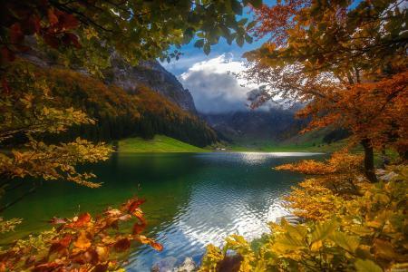 湖,山,金叶,秋天,瑞士,巴扎诺夫安德烈