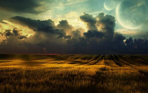 性质,场,小麦,天空