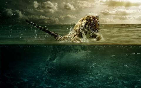老虎,水,鱼,海洋