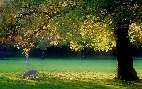 夏天,草,公园,狗,人