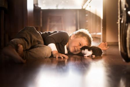 照片,孩子,男孩,小猫,积极