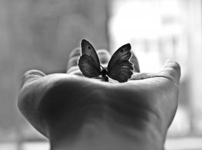 极简主义,棕榈,黑白摄影,蝴蝶