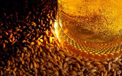 啤酒,大麦,小瓶