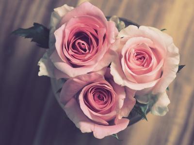 玫瑰,物体