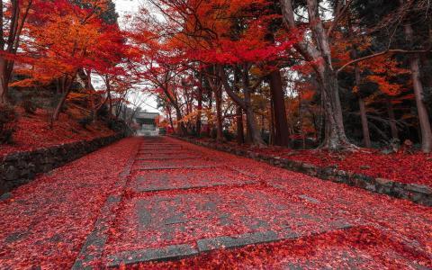 秋天,红色,树,路径