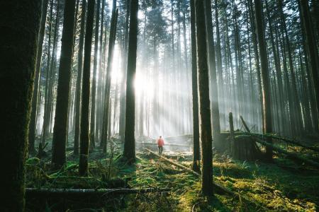 森林,极简主义,极端,娱乐,美丽,光线,太阳