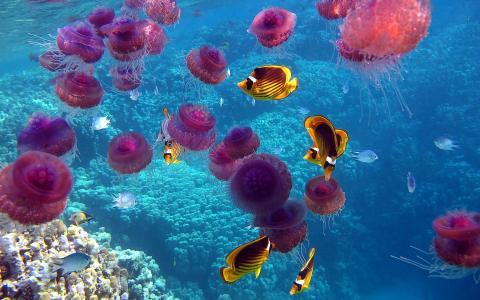 海,海洋,海底世界,鱼,水母,珊瑚