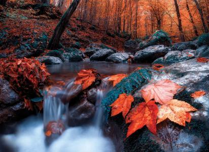 赛义德·尤尼斯,自然,秋天,森林,树木,小溪,树叶