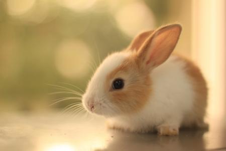 毛茸茸的,看,兔子,耳朵,胡子