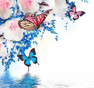 photoshop,春天,白色,蓝色背景,水,郁金香,幻想,蝴蝶