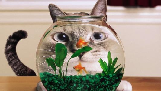 猫,水族馆,鱼,鱼,长相