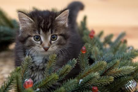 动物,小猫,幼崽,分支,树