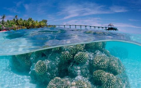 珊瑚,水,海洋,岩石