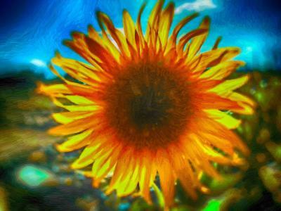 向日葵,花瓣,手绘