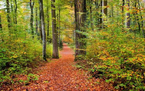 秋天,森林,性质