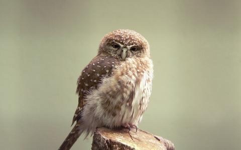 羽毛,喙,丹毒,索韦诺克