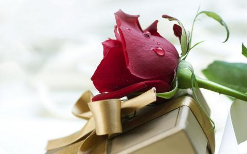 爱,玫瑰,节日,滴,所有情人节,丝带,丝绸,礼物,感情,情人节,花,香