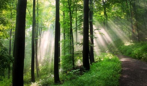 森林,树木,太阳,路,光线,美女