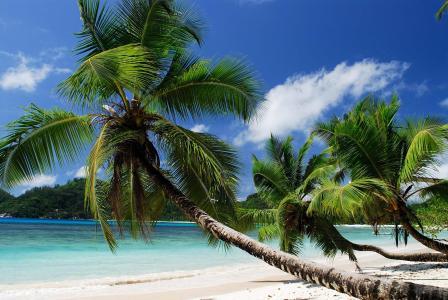 海岸,海滩,天堂,夏天,海洋,棕榈,热带,海洋,热带地区,棕榈树,天堂,夏天,海滩,美丽