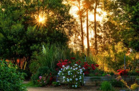智利,花园,光线,灌木,鲜花