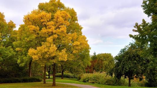 公园,路径,树木,天空,叶子,美女