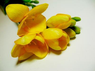 小苍兰,鲜花,美丽