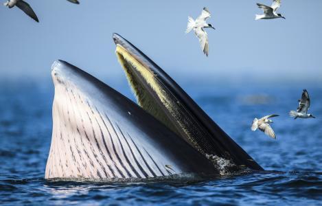 鲸鱼,鸟,海鸥,海洋,动物