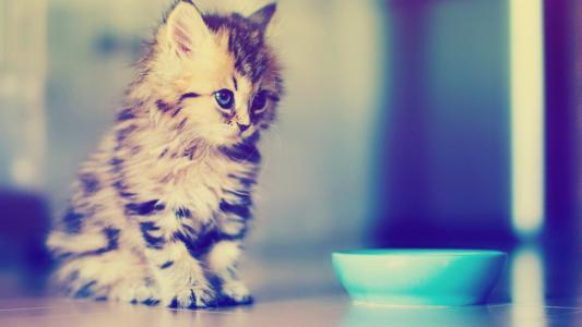 小猫,碗,模糊,可爱,宝贝