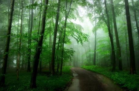 茂密,森林,公路,树木,绿化,美景
