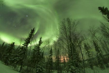 极光,北极光,森林,树木,天空,发光,美女