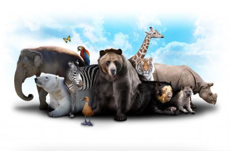 大象,熊,长颈鹿,斑马,河马,动物