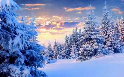 冬天,森林,美丽,天空,云,日落,白色背景,光,太阳