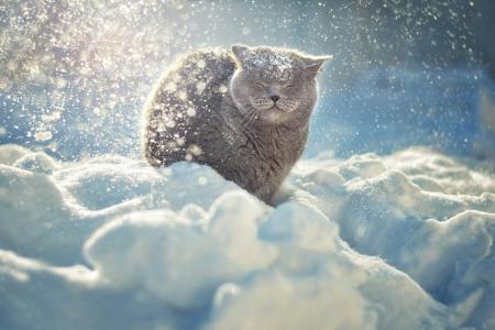 性质,冬天,雪,动物,猫,散景