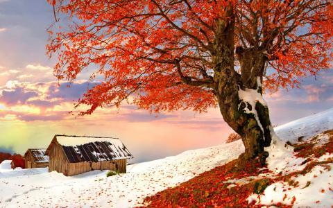 树,叶子,房子,路径,雪