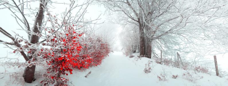 冬天,路,树木