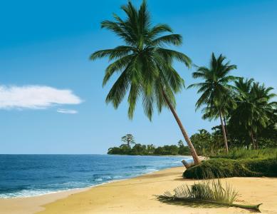自然,热带地区,超级照片,手掌,海滩,海洋,天堂