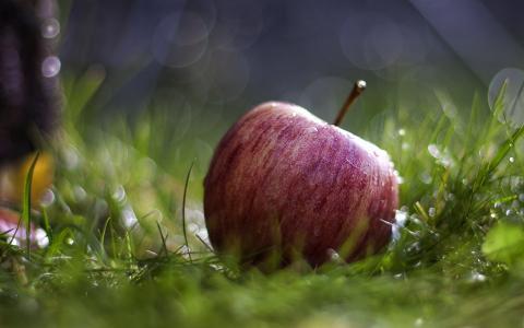 宏,草,苹果