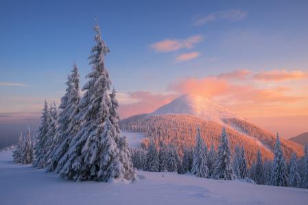 自然,景观,丘陵,雪,树,冷杉,早晨,黎明