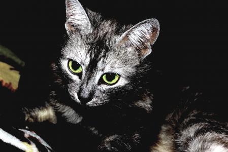 猫,条纹,眼睛