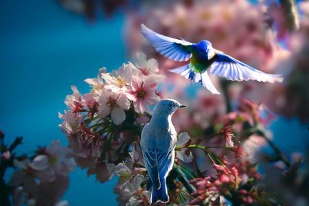 春天,分支机构,开花,性质,泰国Phung,鸟,夫妇