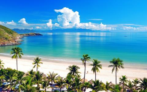 海,棕榈树,夏天,海滩