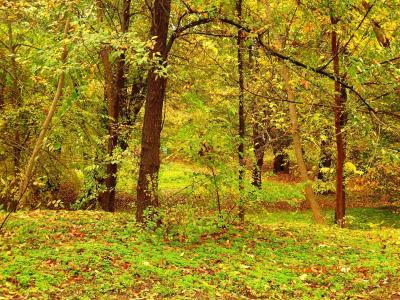 秋天,十月,森林