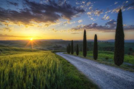 性质,照片,意大利,田地,小麦,路,柏树,太阳,天空,美女,山,丘陵